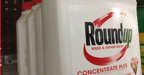 red bottle of Monsantos Roundup herbicide stocked on a store shelf